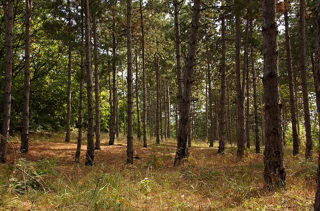 Metsää ja puita